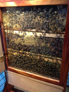 The Observation Hive!  It has a little outlet through the wall for the bees to venture into the great outdoors.